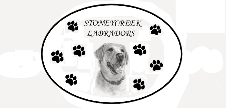 STONEY CREEK LABRADORS